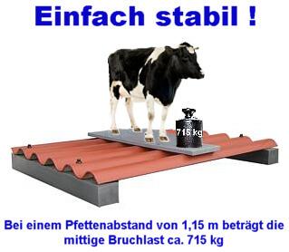 Kuh steht auf Zementplatte